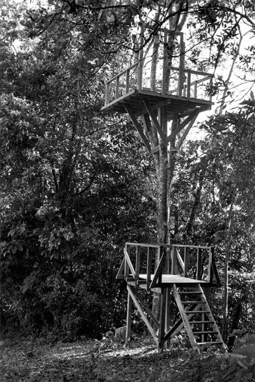 Tree Platform 3